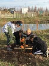 Planting Juniper into the Arboretum