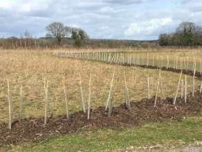 Brilliant new hedgerow
