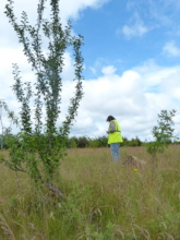 Surveying for wildflowers and grasses