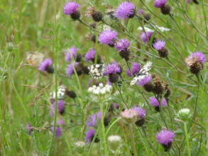 The meadow is bursting with life and colour!