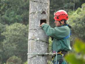 Forest Guard Carlos Mario creating tree cavities