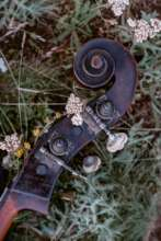 Music meets nature