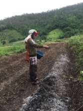 Farmer adding biochar to soil
