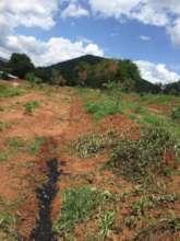 De-Forested Terrain