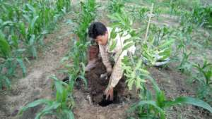 Planting trees using biochar