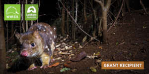 Habitat Protection-Spotted-tailed Quoll