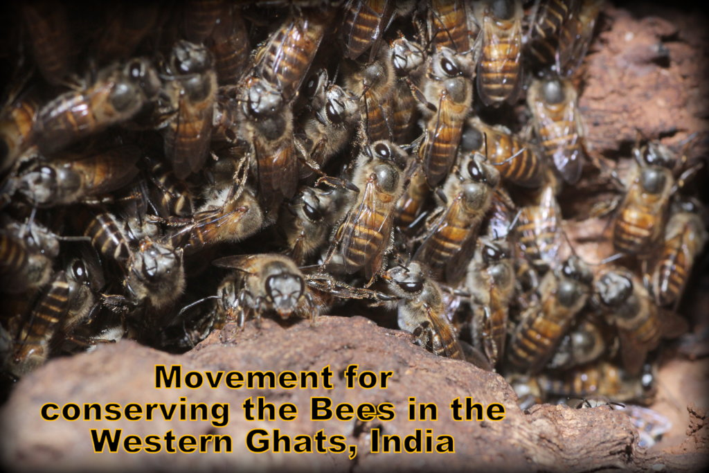 Movement for conserving bees in the Western Ghats