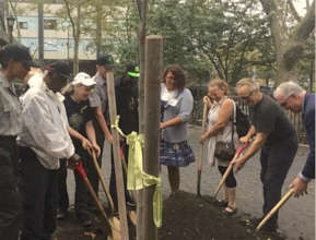 First of 1,000 new street trees: Eastern Red Bud!