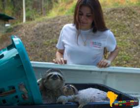 SAI animal expert oversees transport of 2 sloths.