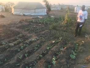 Mr. Lucas' garden