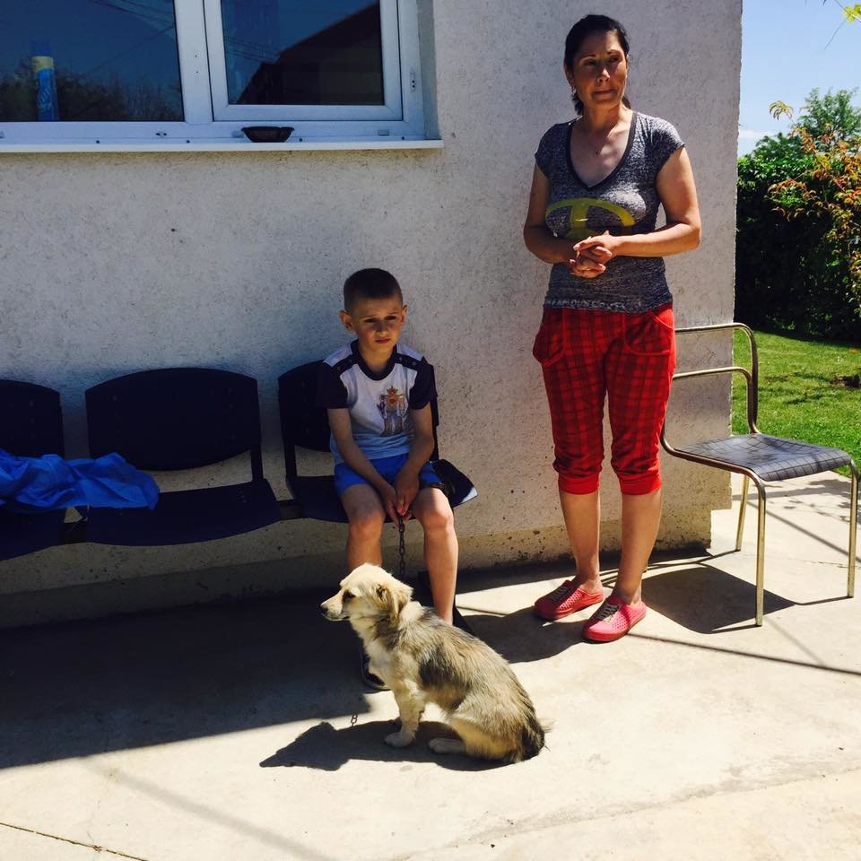 Sterilization of dogs from Romanian poor villages