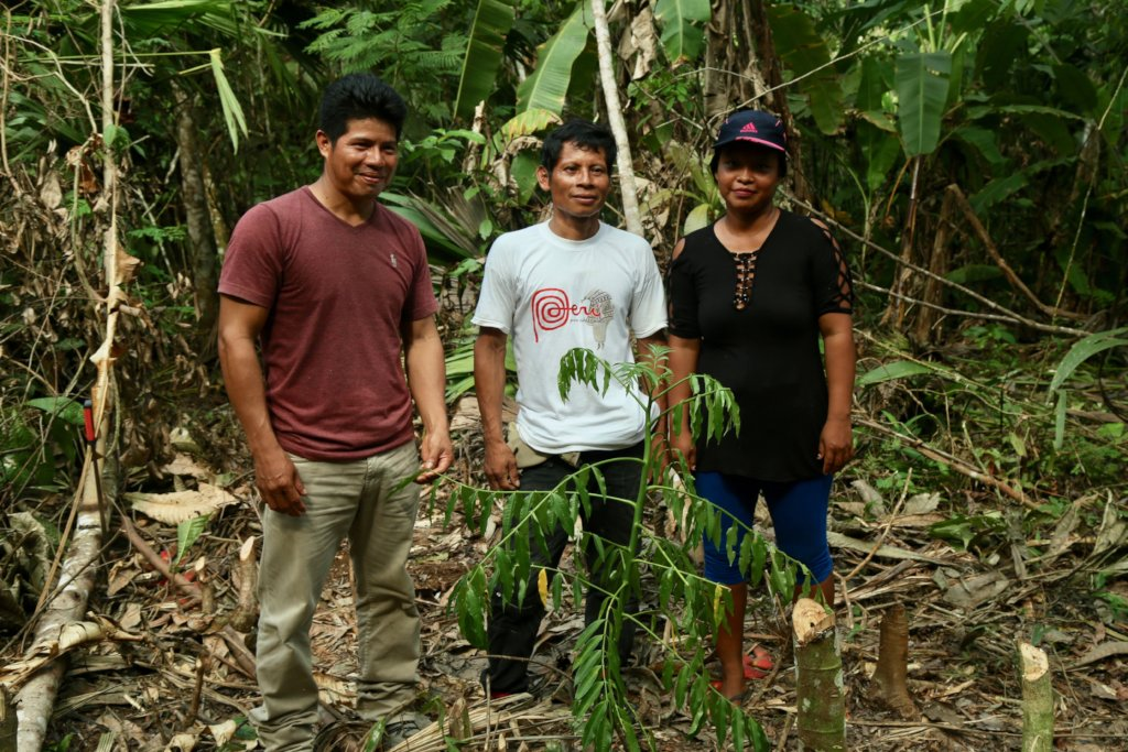 Replanting the Peruvian Amazon with Fruit Trees