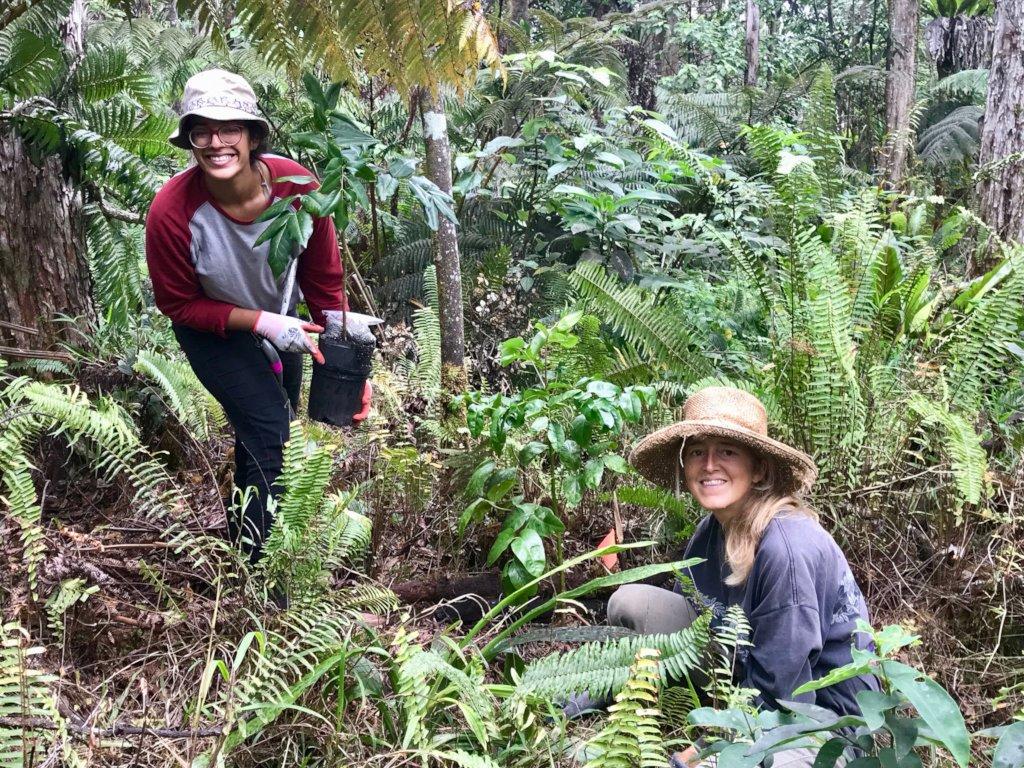 Protect Hawaii's Last Native Lowland Rainforest