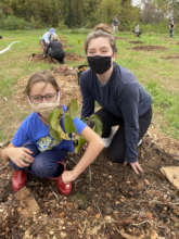 Planting an orchard in northern Virginia this fall