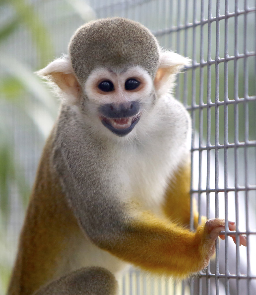 Fruit Trees for Monkeys Released from Research