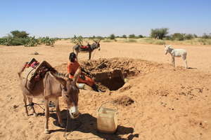 Donkeys are a great help for collecting water!