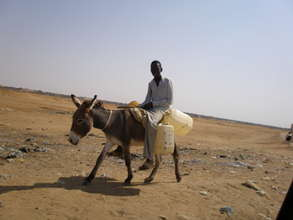 Donkeys help carry water home