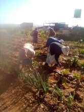 Ladies from Phedisanang SHG  in their veg garden