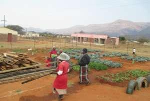 One of SHG Member vegetable garden