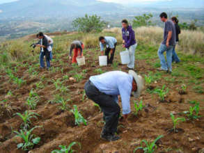 Milpa sowing (the three sisters)