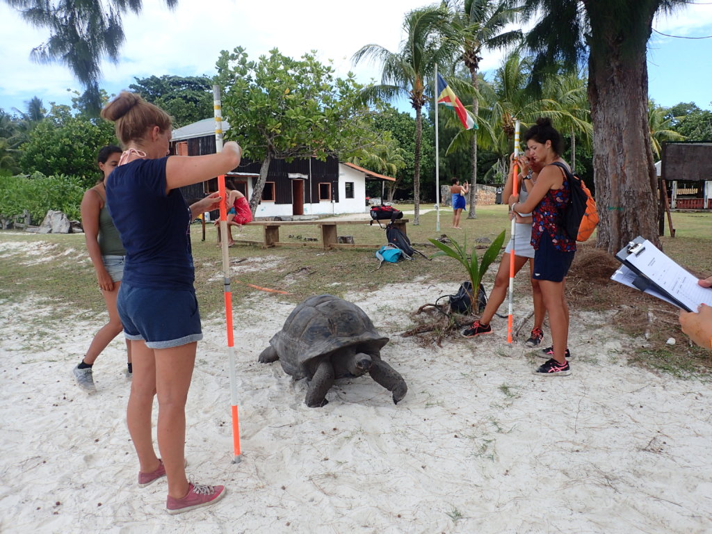 Giant Tortoise Research in the Seychelles