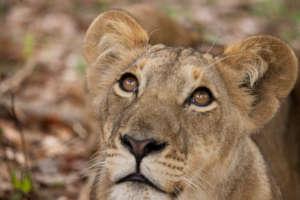 Help mitigate Human Wildlife Conflict in Zimbabwe