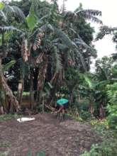 Sudarshan watering the home nursery