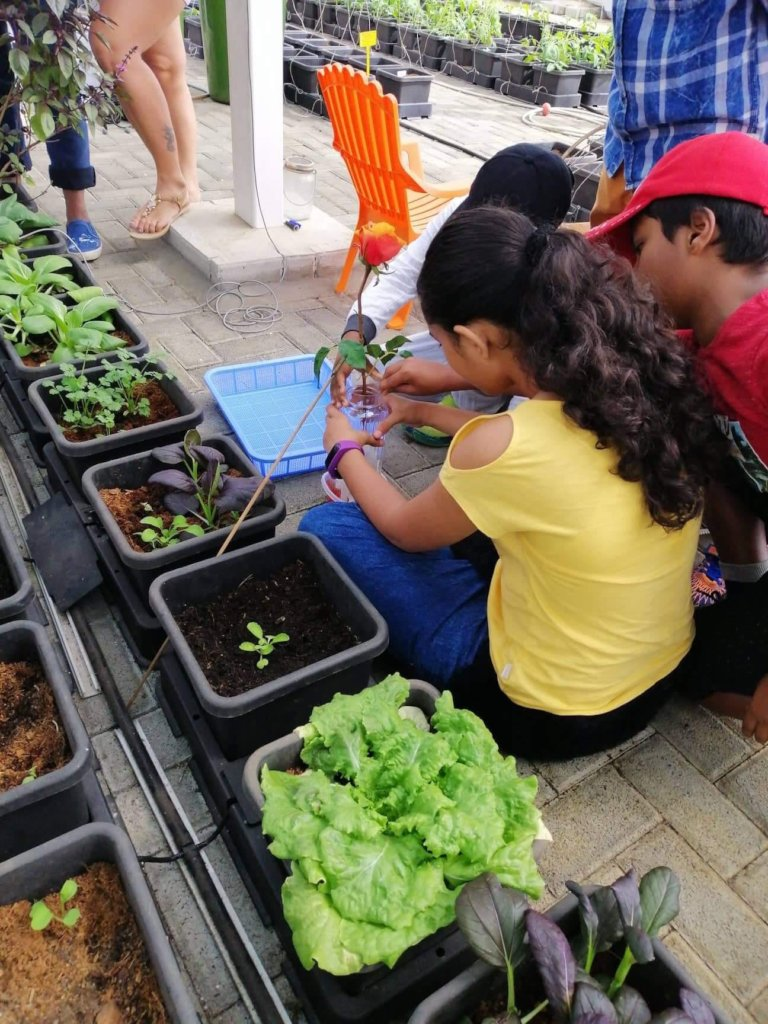 Teach sustainable farming to 150 Mauritian youths