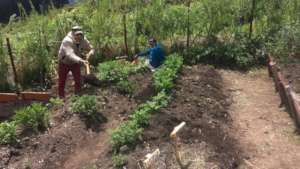 People working on the garden