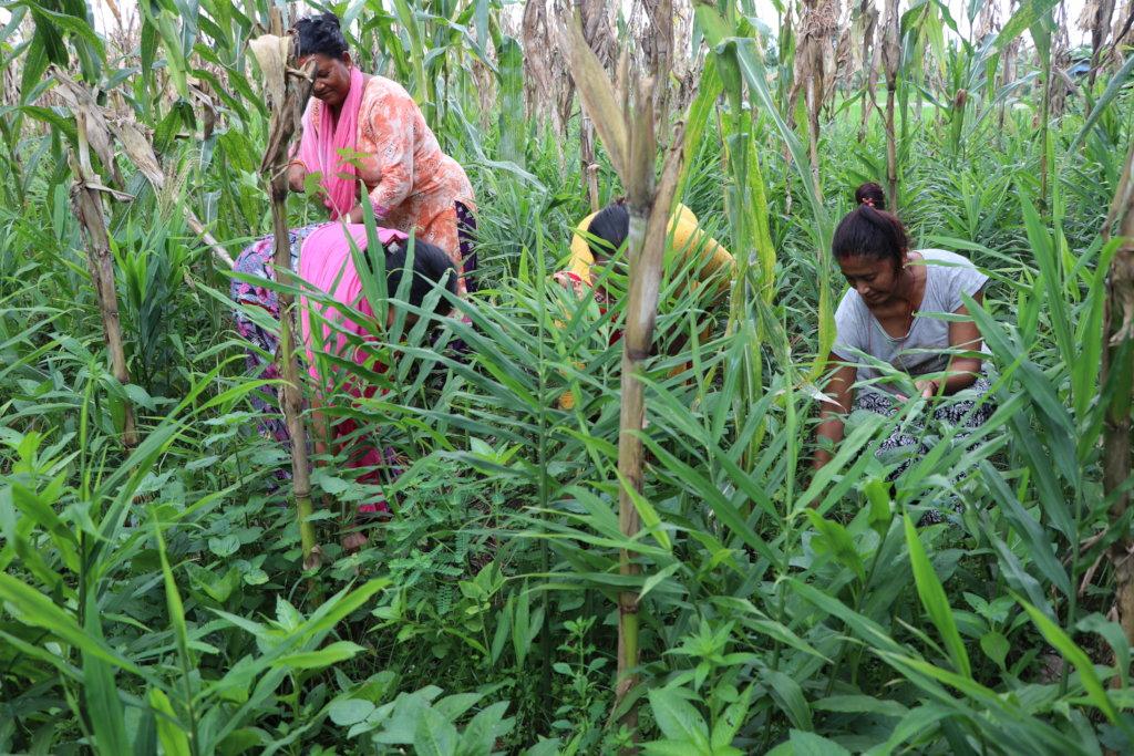 Help 600 Nepalese Dalit women like Sor to thrive