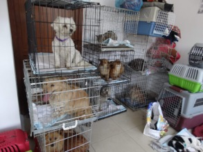 dogs waiting for castration