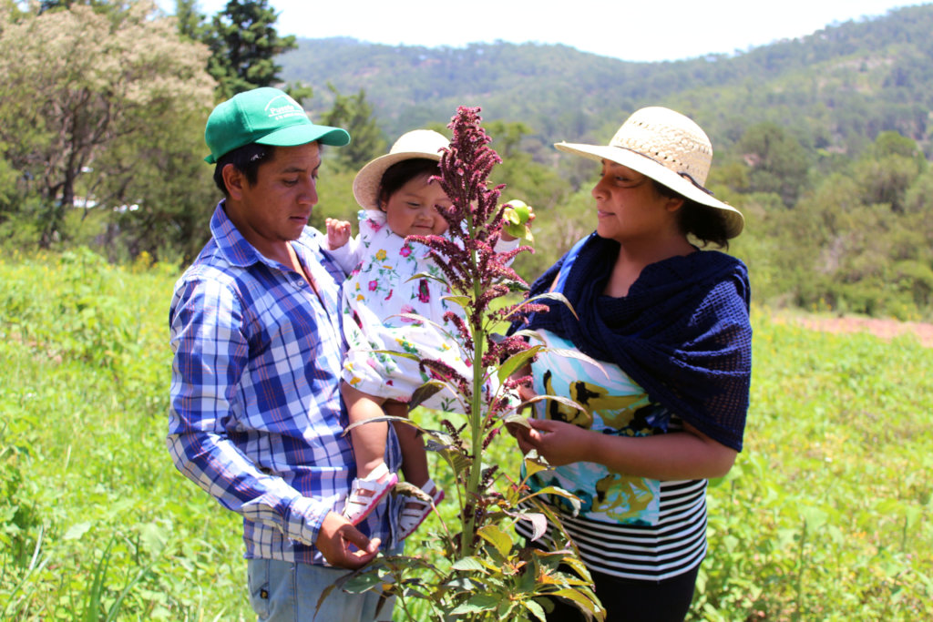 ENGAGE 100 YOUNG FARMERS IN ECOLOGICAL AGRICULTURE