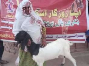 Goat Handed Over to a Woman