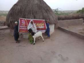 The Thar women with her Goat