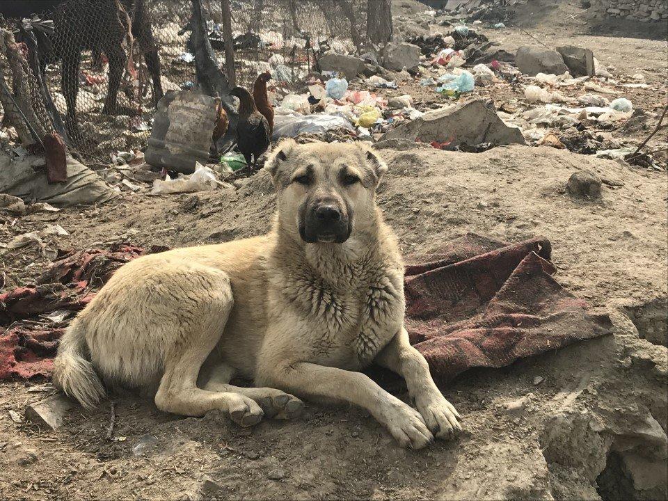 Help Nowzad to reduce rabies in Afghanistan!
