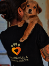 Save 50 suffering Indian street dogs