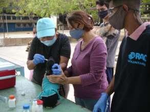 Red de apoyo canino Community Vaccination