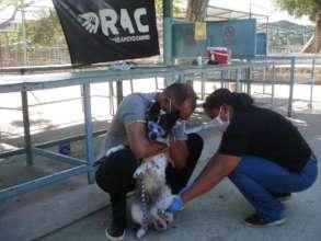 Red de apoyo canino Maracaibo Rabbies Vaccination