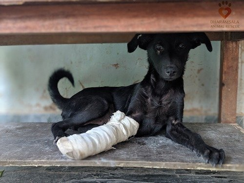 Save Hundreds of Lives - Sponsor a Street Dog