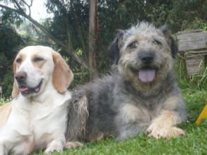 Vivatma dogs are happy dogs