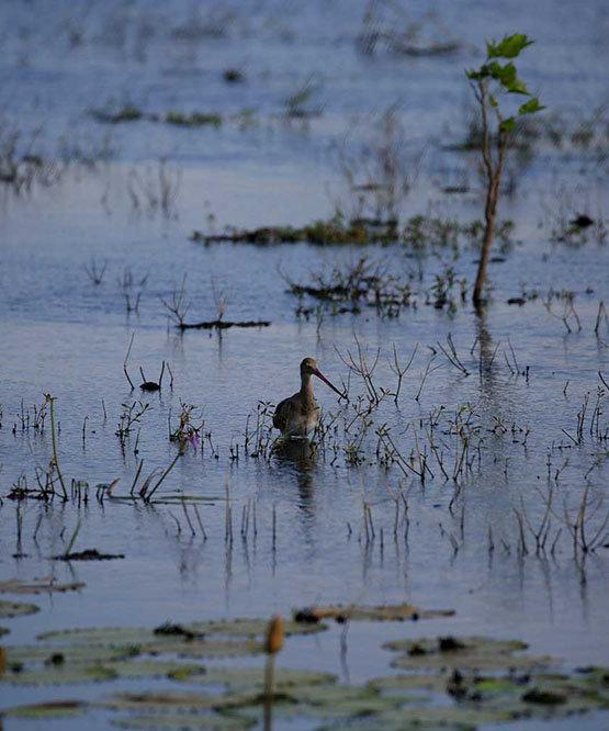 Initiative to Anavilundawa Bird Sanctuary Conserve