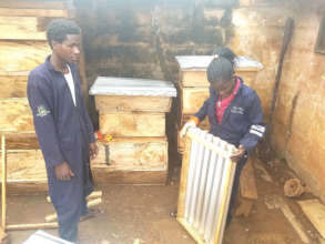 Bee hive production ongoing