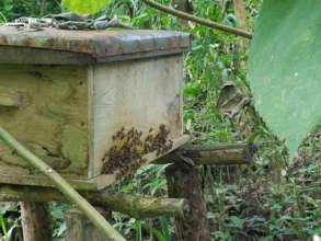 Single langthroth hive progressing