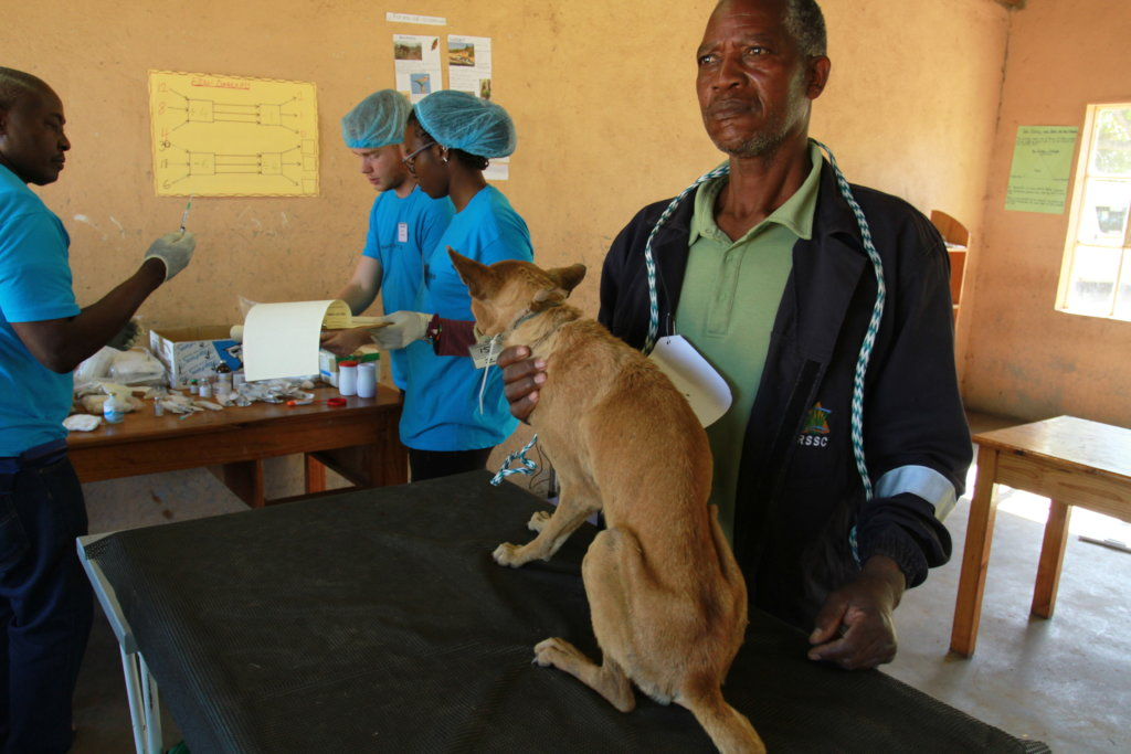 Spay and Neuter Cats and Dogs in Rural Eswatini