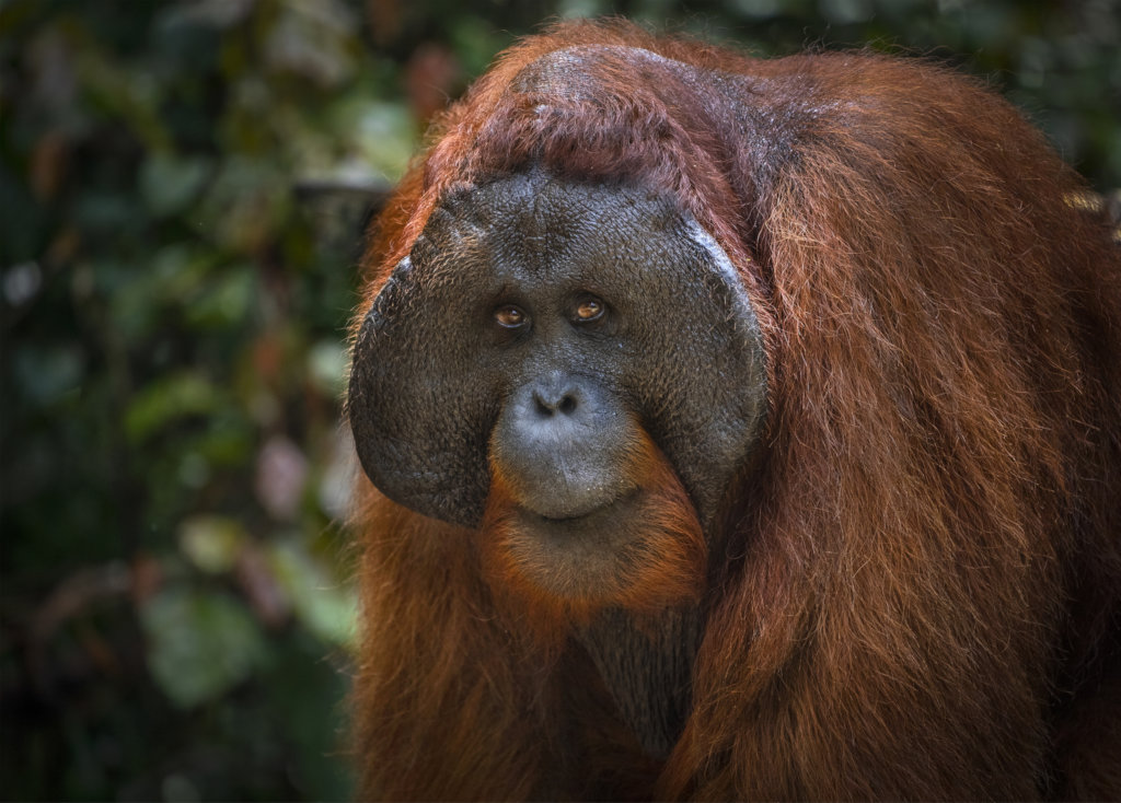 Support 13 villages to save the Bornean Rainforest