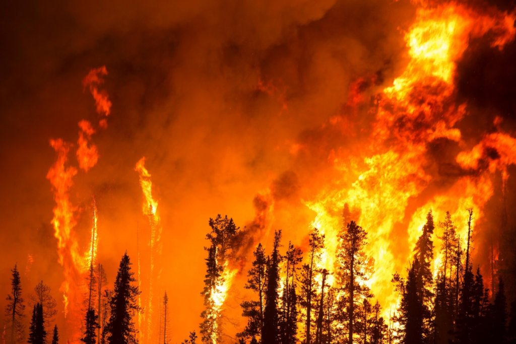 CLIMATE CRISIS: AMAZON&AFRICA WILDFIRE RELIEF FUND