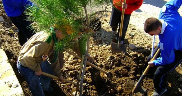 Afforestation project for liberated areas in IRAQ