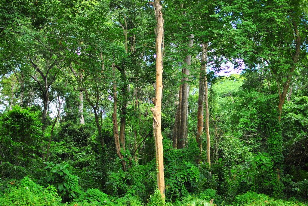 Udzungwa Botanic Garden