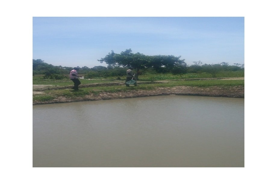 upscaling fish farming for change