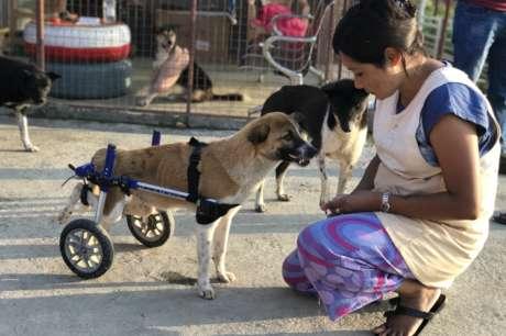 Help us help the needy animals